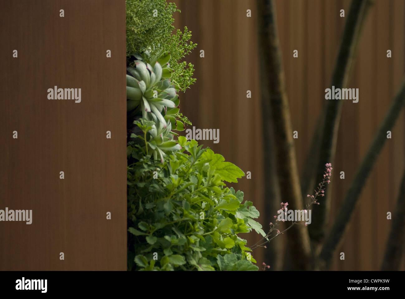 heuchera purpurgl ckchen stockfoto bild 50285253 alamy. Black Bedroom Furniture Sets. Home Design Ideas