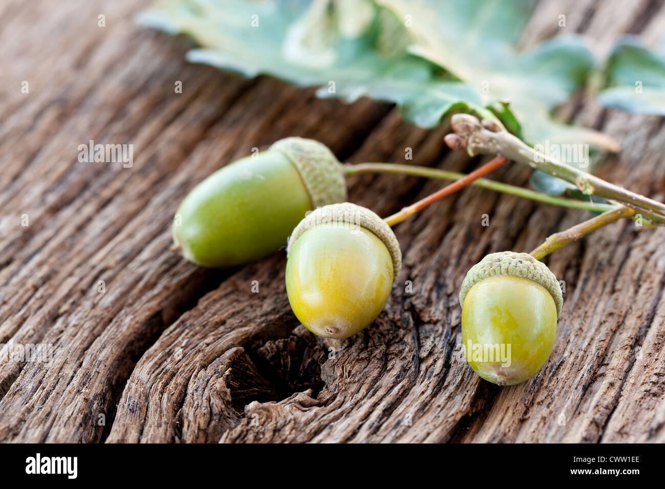 Eichel mit Blättern auf einem alten Holztisch Stockbild