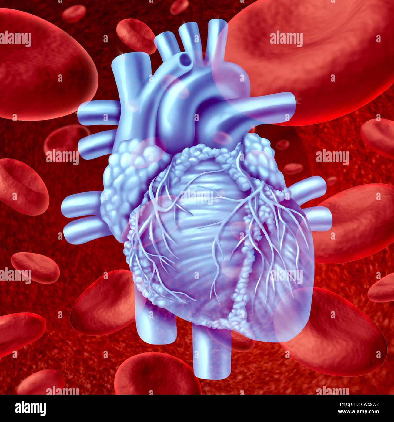 Anatomie des Menschen Herz Blut fließen mit mikroskopisch kleinen ...