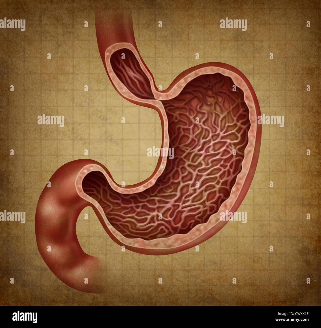 Magen Anatomie Diagramm des menschlichen Verdauungsorgane mit einem ...