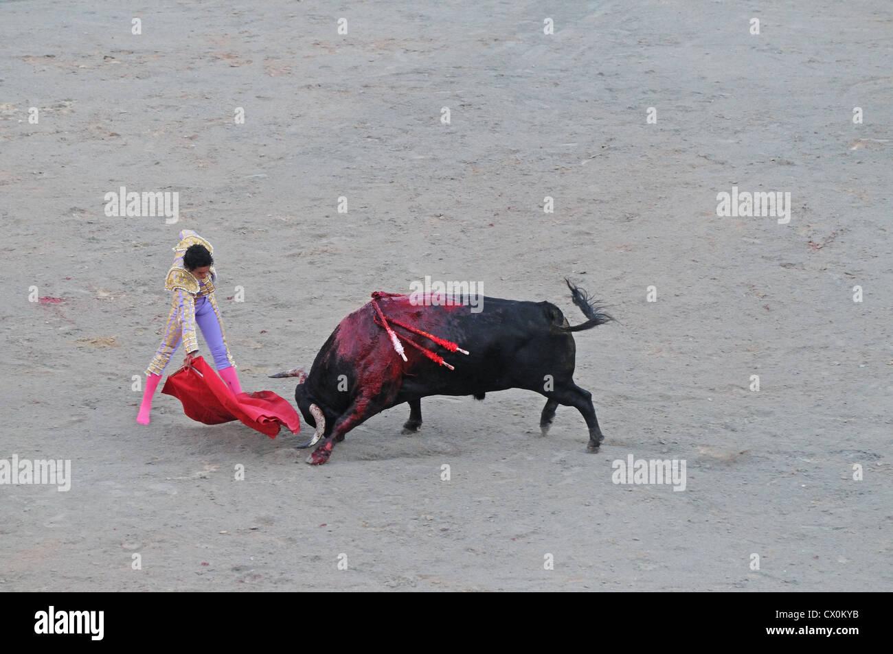 Bulls Kopf prakts unten