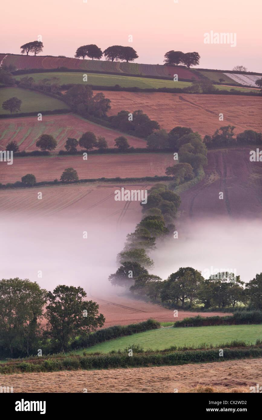 Nebel bedeckt hügelige Ackerland, Stockleigh Pomeroy, Devon, England. Herbst (September) 2012. Stockbild