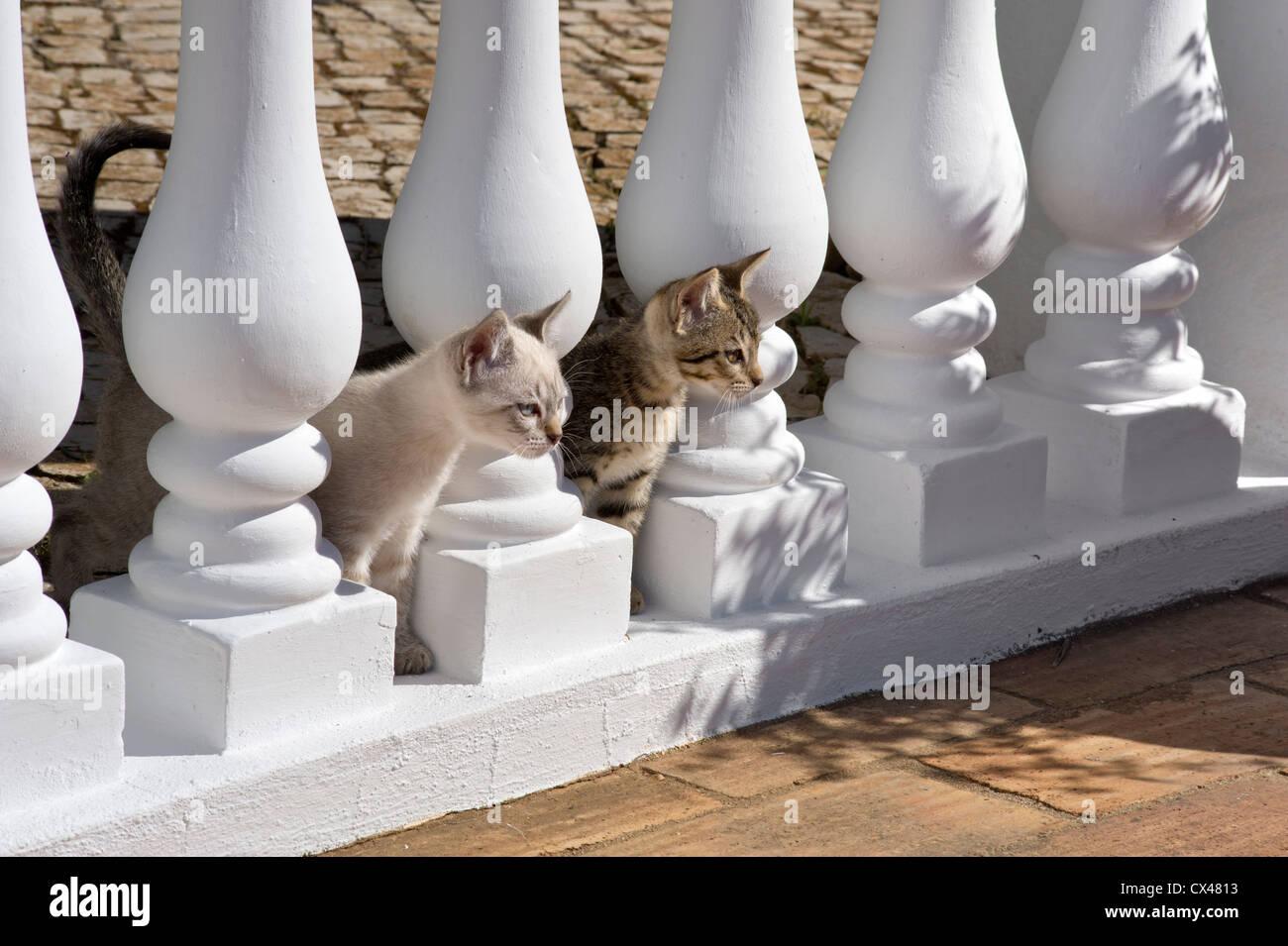 Zwei Kätzchen peeping durch Balustraden in Portugal, Algarve Stockbild