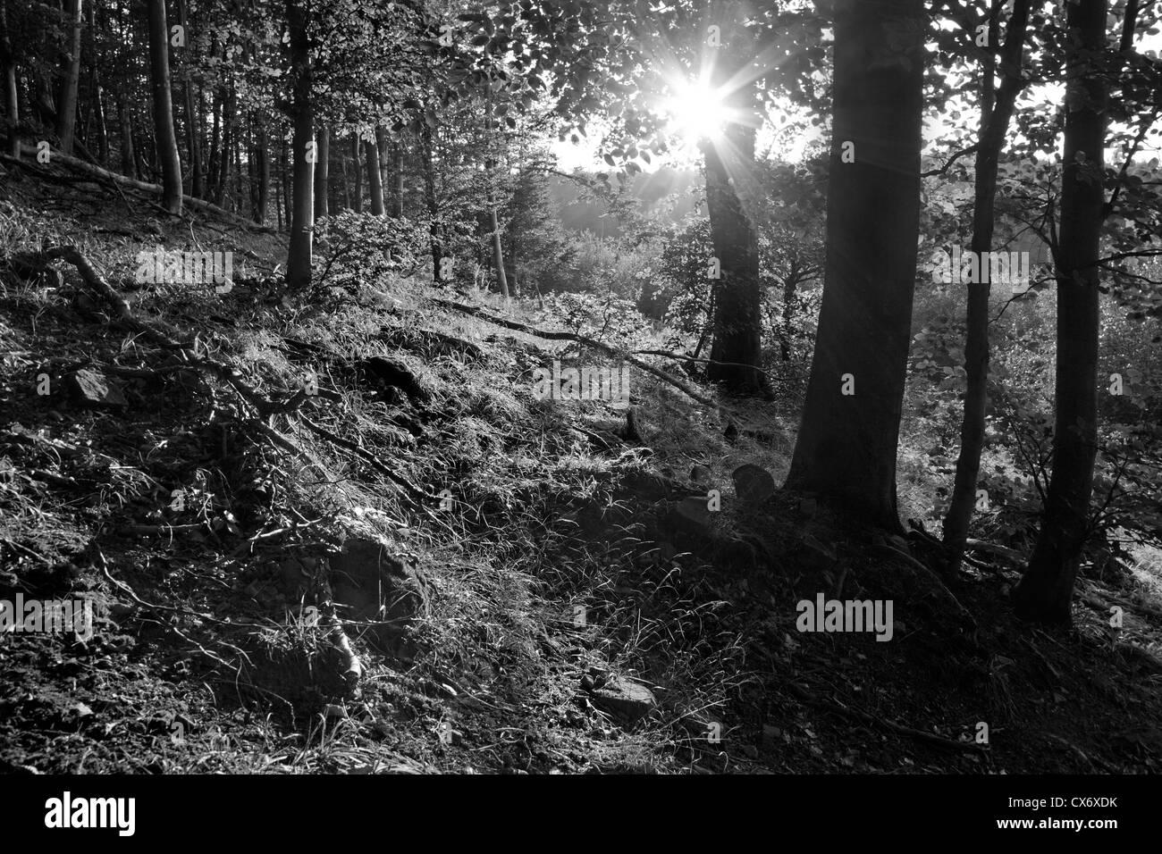 Hintergrundbeleuchtung in Holz Stockbild