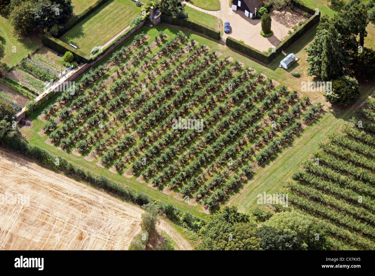 Luftaufnahme von einer Apfelplantage in Kent Stockbild