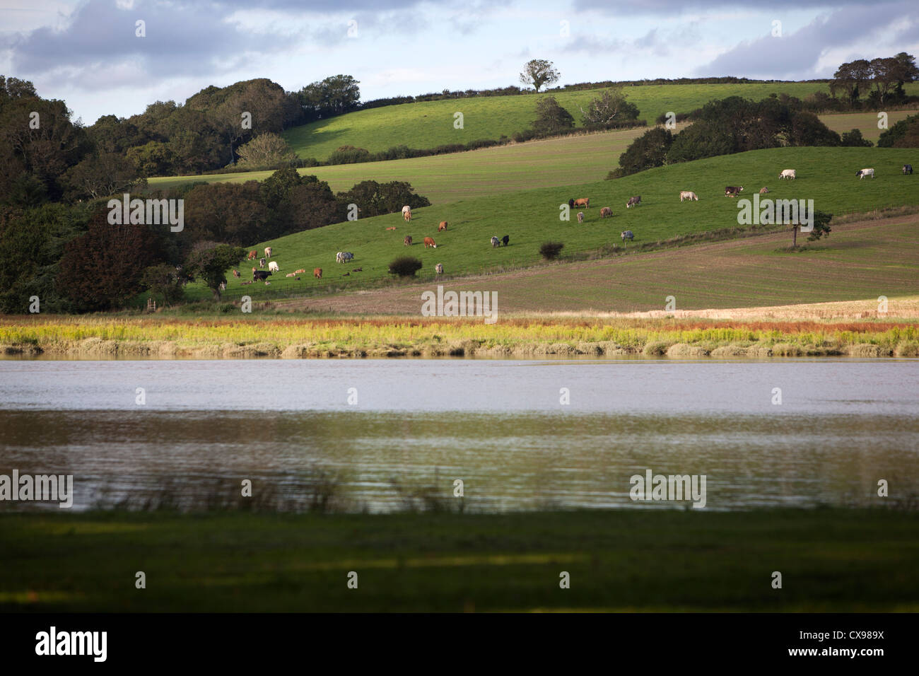 Der Fluss Tiddy fließt vorbei an einer typischen englischen Country-Szene im St Germans, Cornwall Stockbild