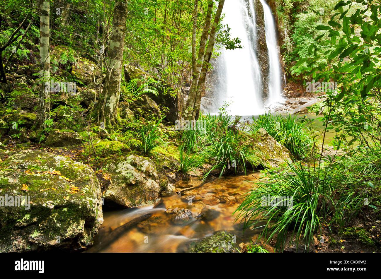 Grenze fällt von Regenwald umgeben. Stockbild