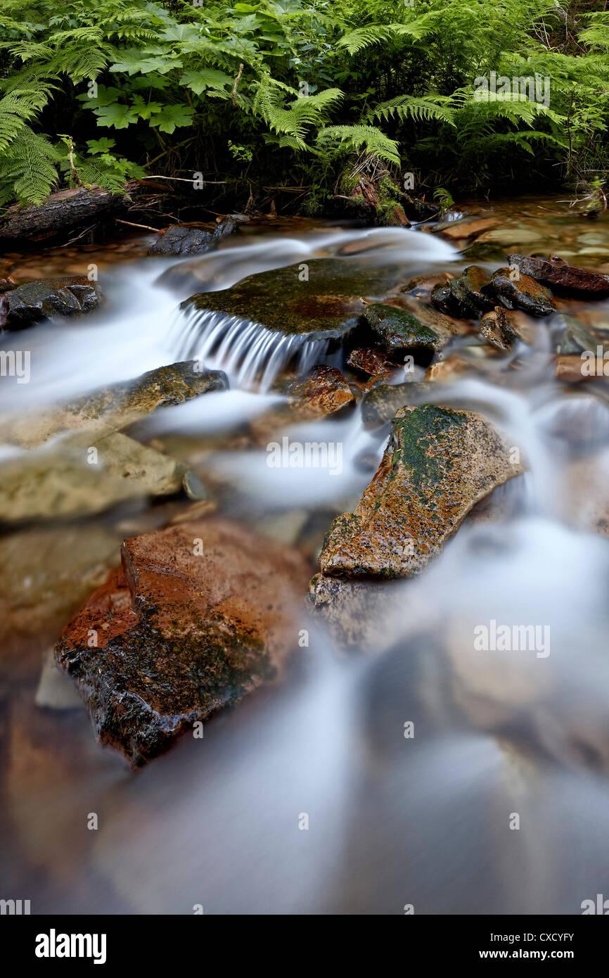 Kaskaden auf gelb Hund Creek, Coeur d ' Alene National Forest, Idaho Panhandle National Forests, Idaho, Vereinigte Stockbild