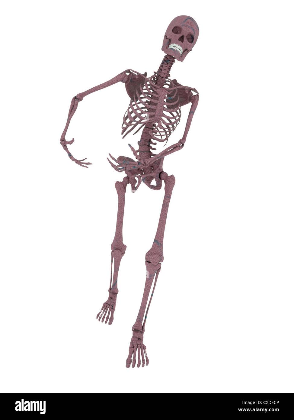 Stehend, zu Fuß Skelett mit Waffen in der Lage sein \