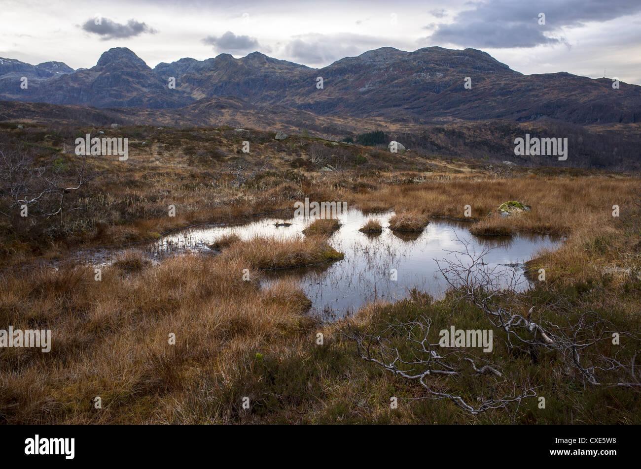 Kvamskogen, Myr, Fjäll, Fjell, Natur, Höst, Høst, vatten Stockbild