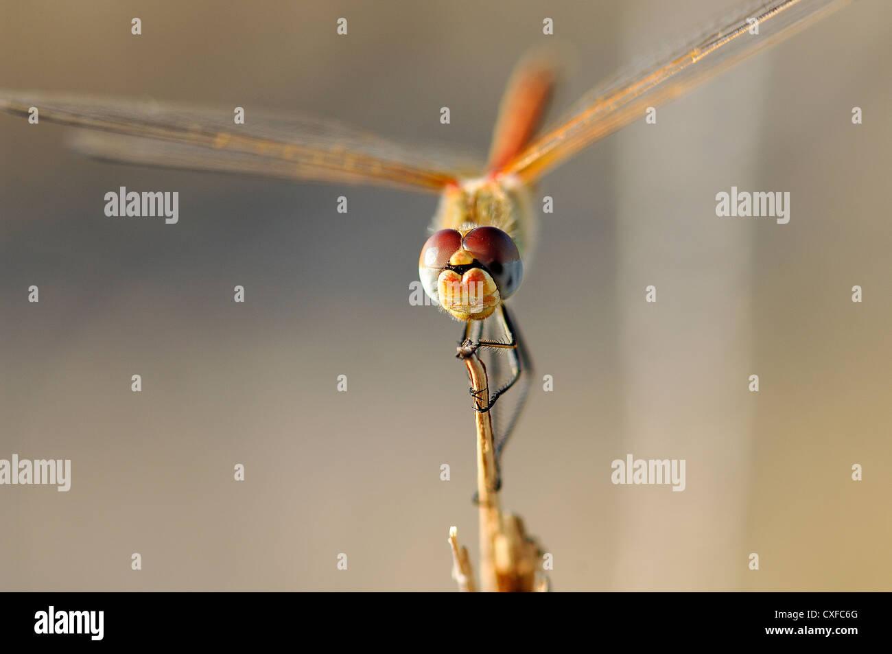 Libelle im sind natürliche Umwelt Stockbild