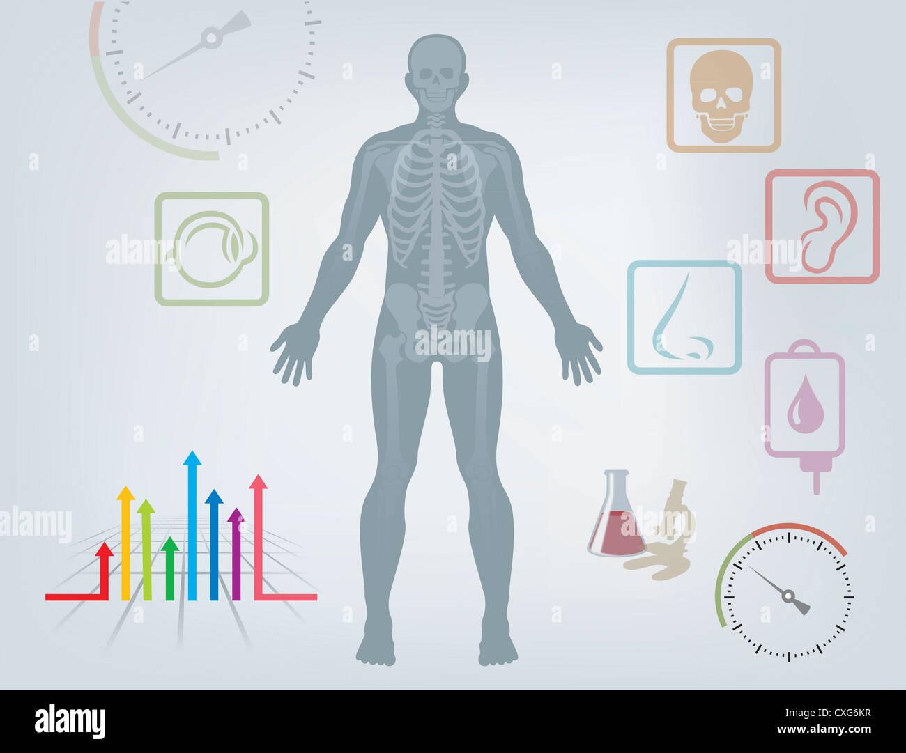 Charmant Teile Des Körpers Diagramm Ideen - Menschliche Anatomie ...