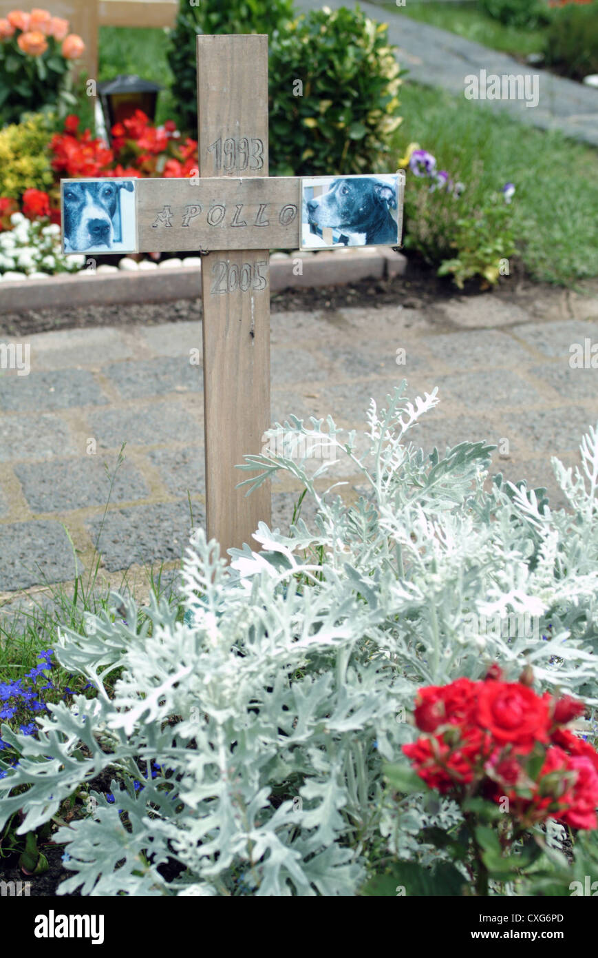 Berlin Hunde Grab In Einem Tierfriedhof Stockfoto Bild 50758357