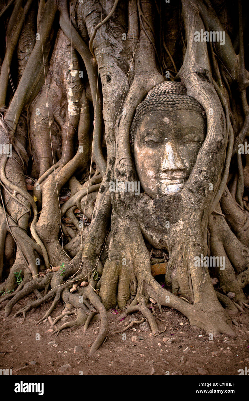 banyan tree roots stockfotos banyan tree roots bilder alamy. Black Bedroom Furniture Sets. Home Design Ideas
