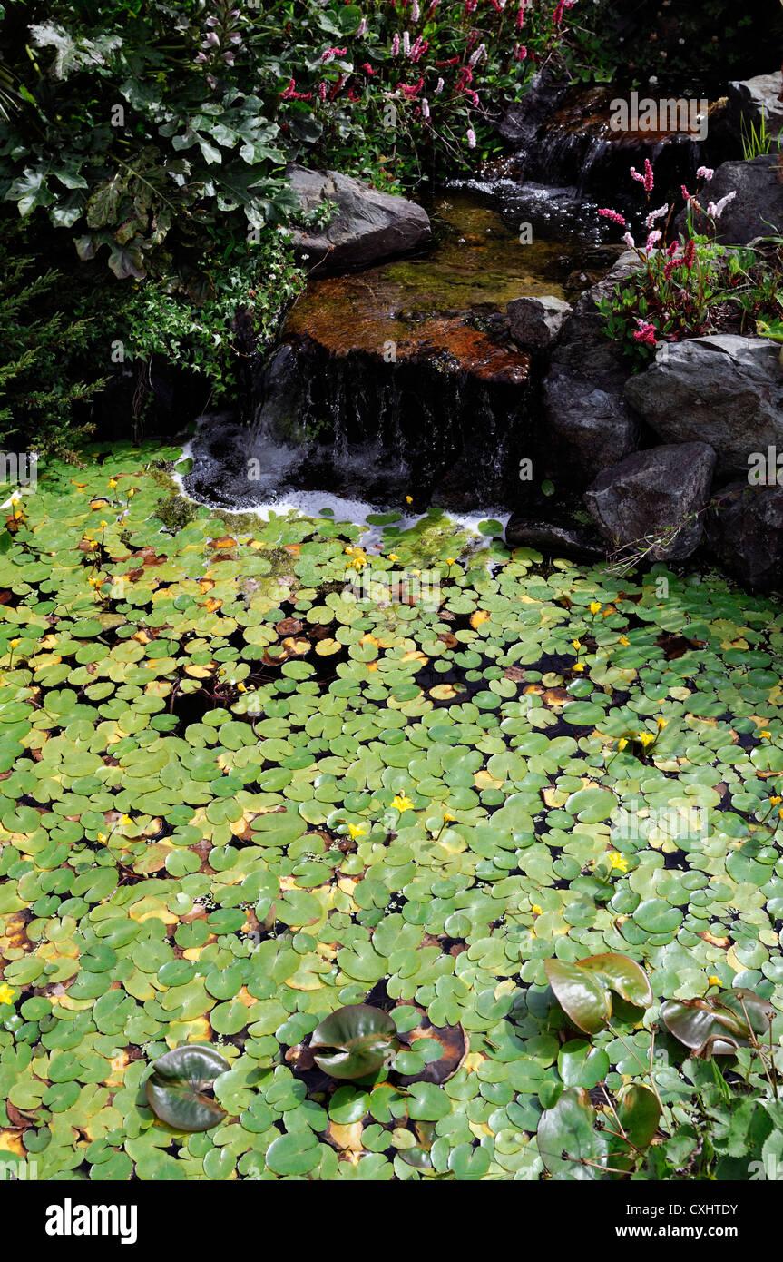 kleiner gartenteich pool wasserfall feature lily seerosen im garten design stockfoto bild. Black Bedroom Furniture Sets. Home Design Ideas