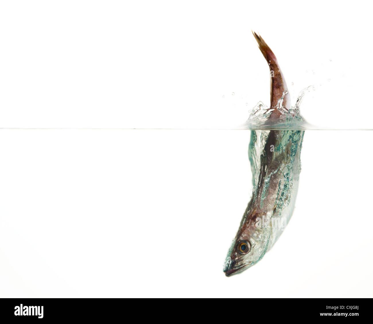 Sea Food Splash Stockbild