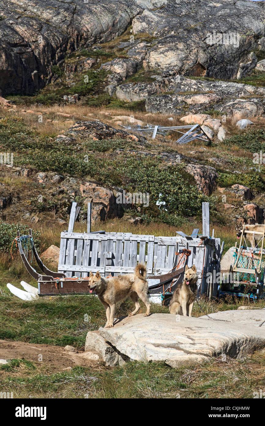 Schlittenhunde sitzen ihren Zwingern in Ilulissat, Grönland Stockbild