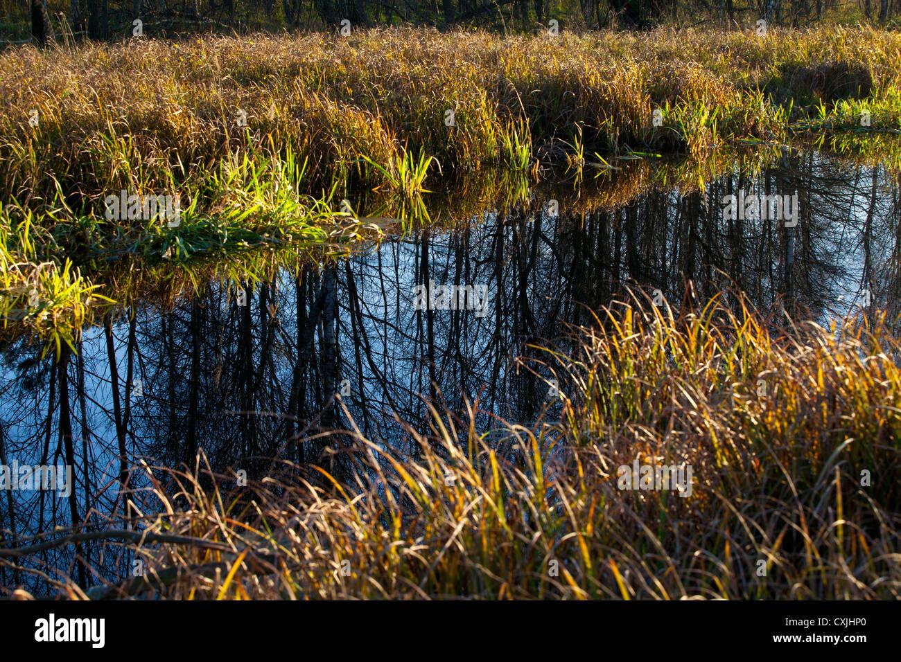 Lasica kanal moor sumpf im kampinos kampinos for Wildparks in der nahe