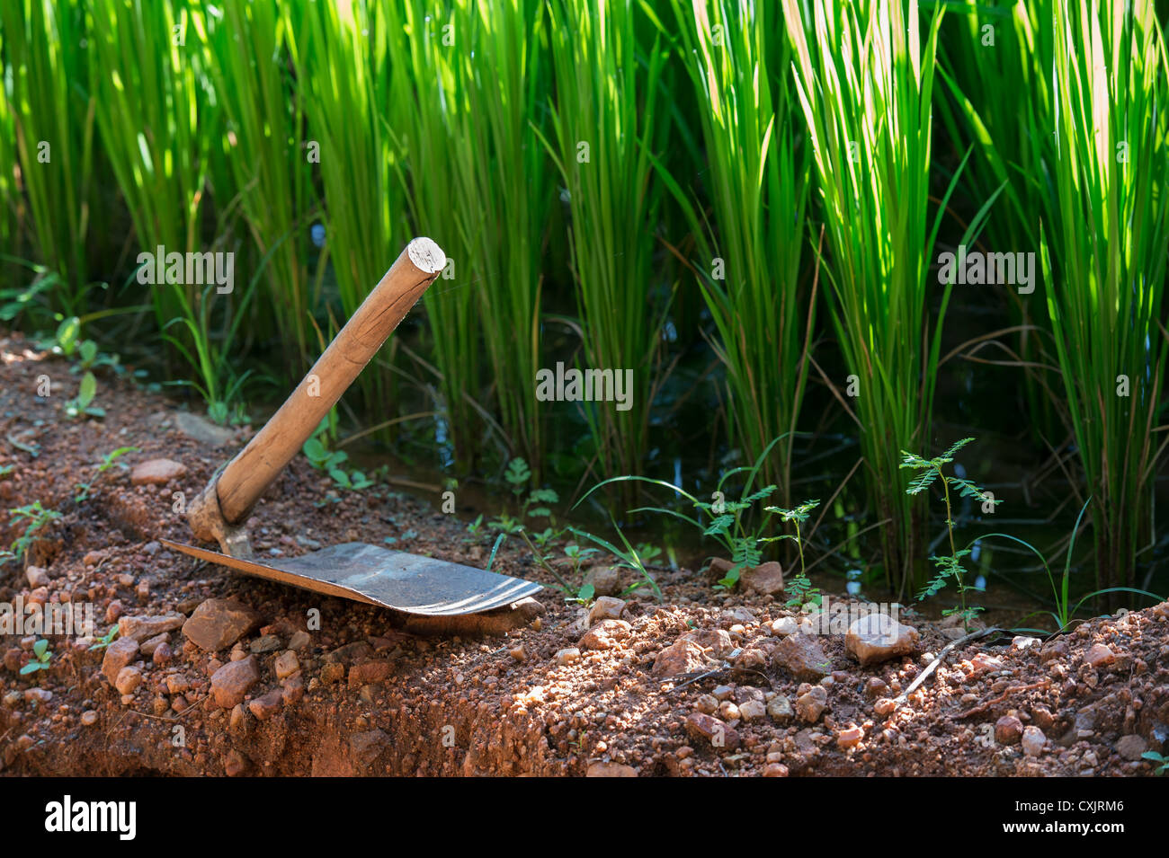 Farming tools stockfotos farming tools bilder alamy for Indischer holztisch
