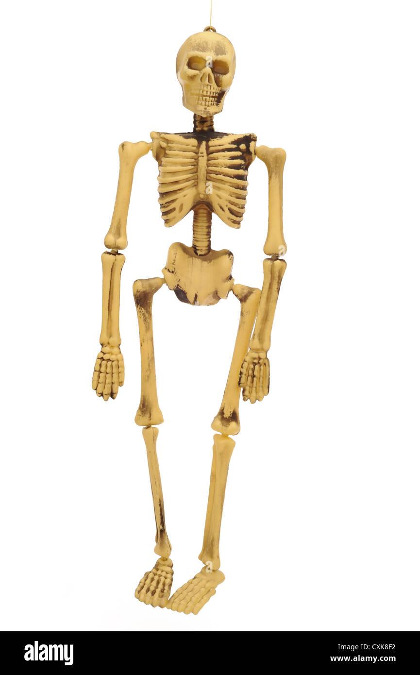 Kunststoff menschlichen Skelett hängenden isoliert auf weiss Stockbild