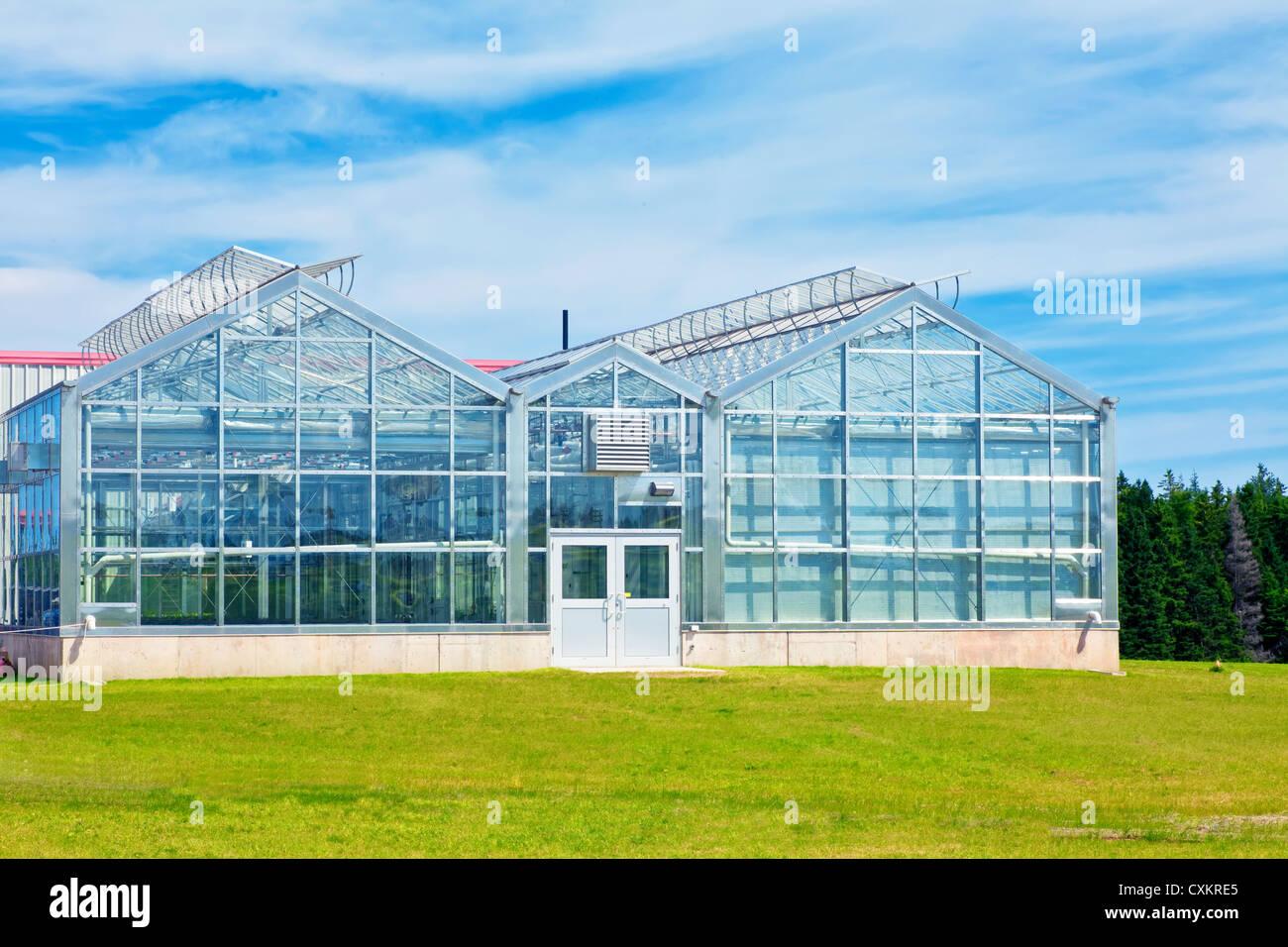 Grosse Kommerzielle Glas Gewachshaus Stockfoto Bild 50837309 Alamy