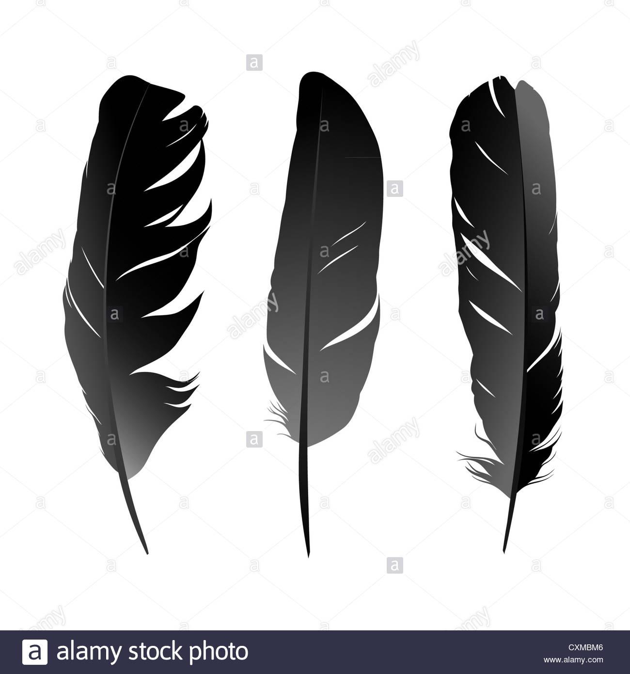 Vektor-set schwarz Vogelfeder auf weißem Hintergrund Stockbild