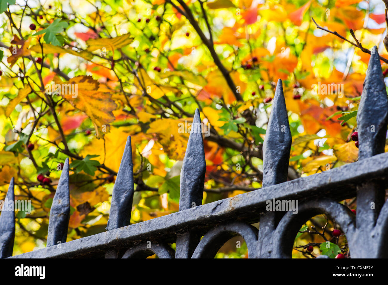 Live Fence Stockfotos & Live Fence Bilder - Alamy