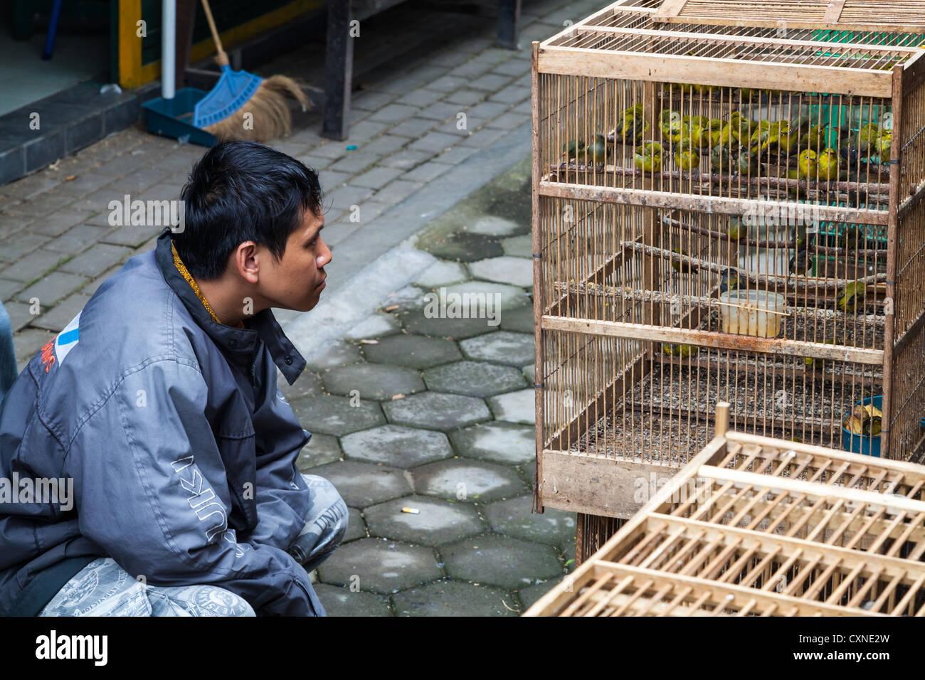 Mann beobachtet Vögel auf den Vogelmarkt in Yogyakarta in Indonesien Stockbild