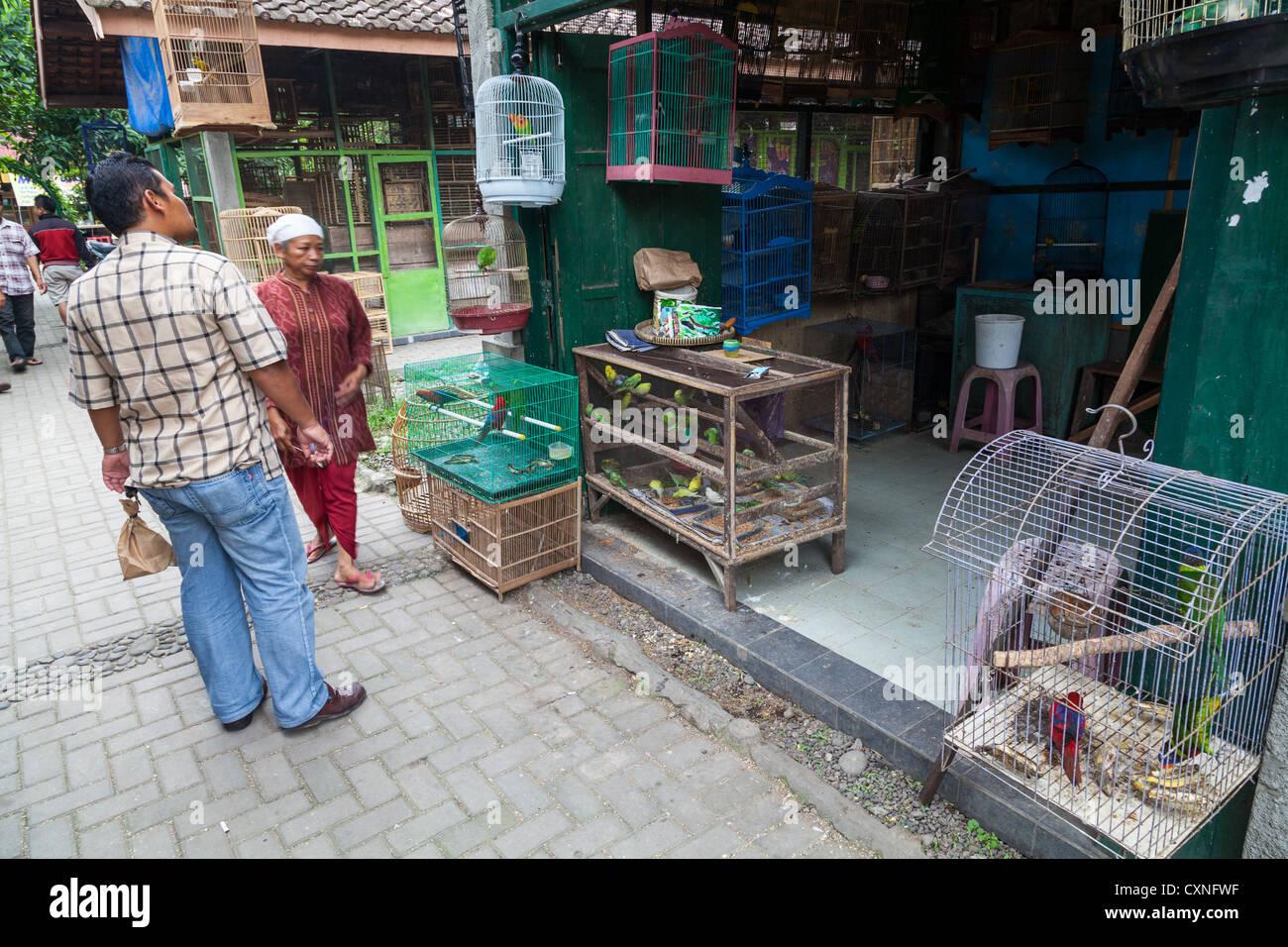 Auf dem Vogelmarkt in Yogyakarta in Indonesien Stockbild