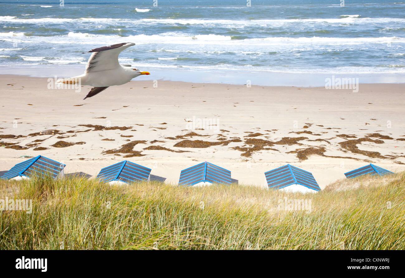 Holländische Häuschen am Strand mit Möwe in De Koog Texel ...