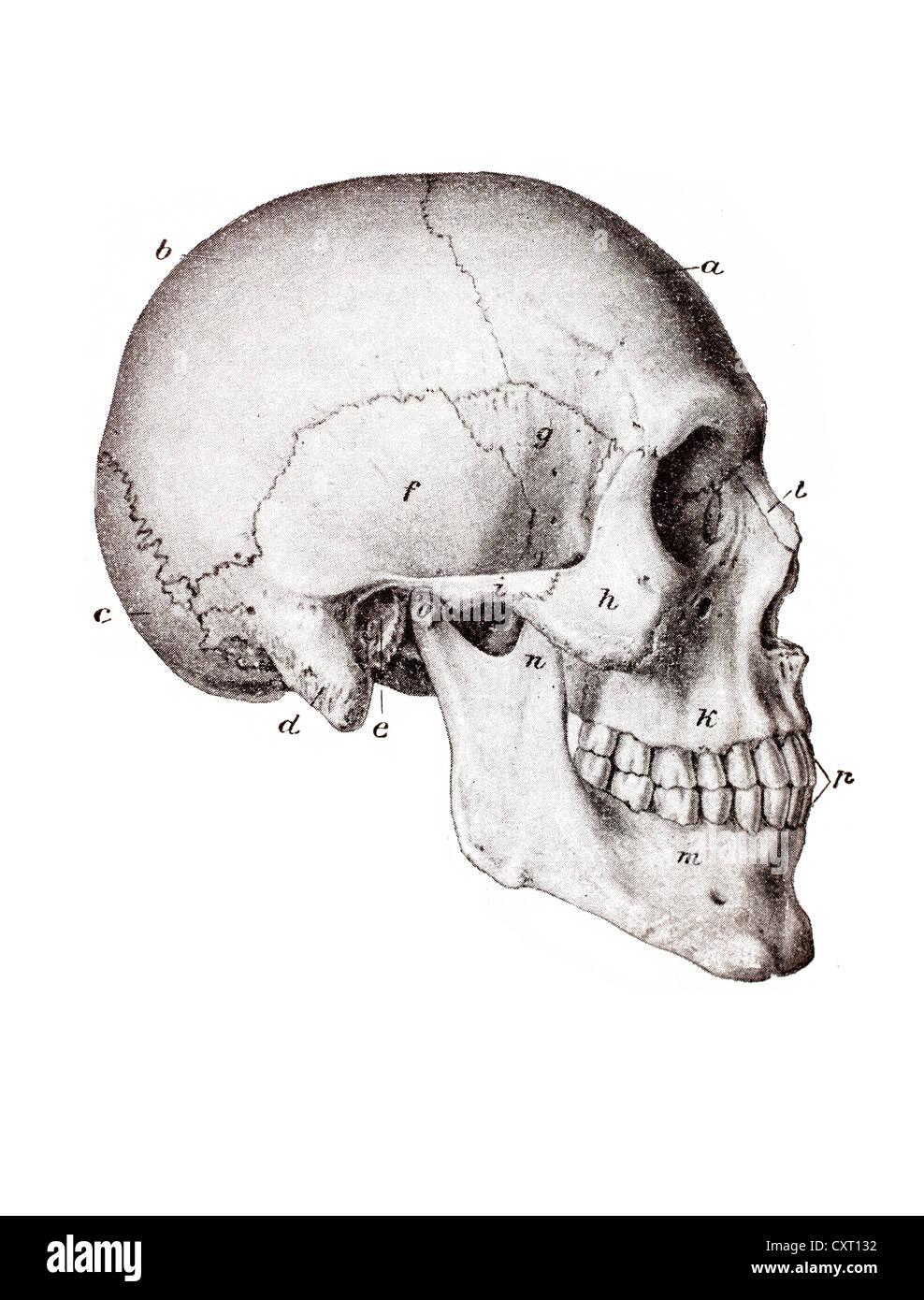 Tolle Anatomie Der Basis Des Schädels Bilder - Anatomie Ideen ...