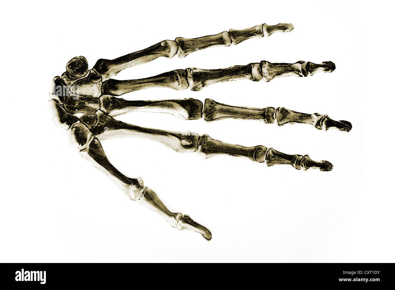 Hand Drawn Illustration Drawing Human Stockfotos & Hand Drawn ...