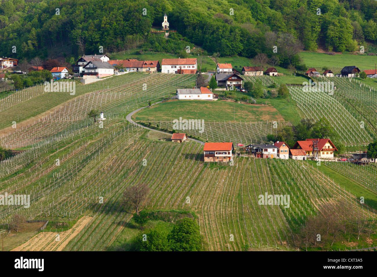 Weinberge In Der Nähe Von St Anna Bin Aigen Kloecher Wein Route