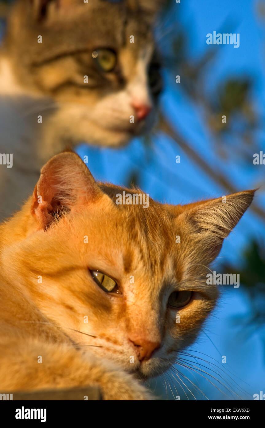 Ziemlich Eins Zwei Von Katze 5 Draht Galerie - Der Schaltplan ...