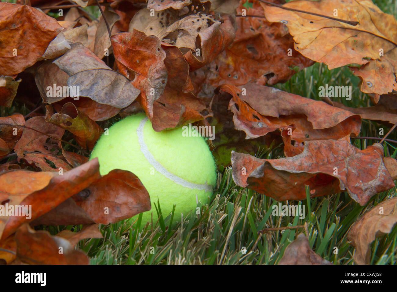 Ein Tennisball in trockene Blätter verloren. Stockbild