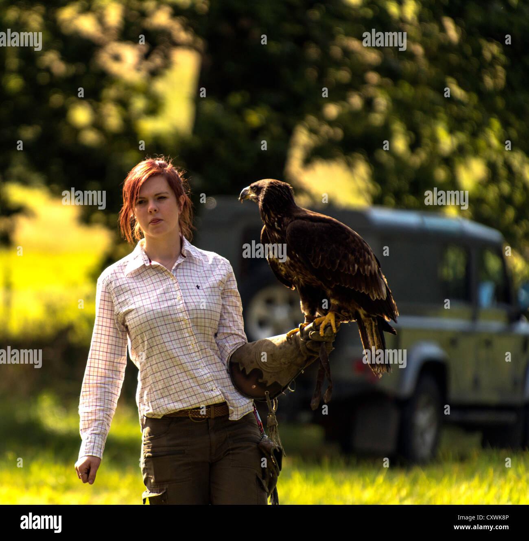 Englische Schule der Falknerei und Greifvogel Zentrum Biggleswade England UK Stockbild