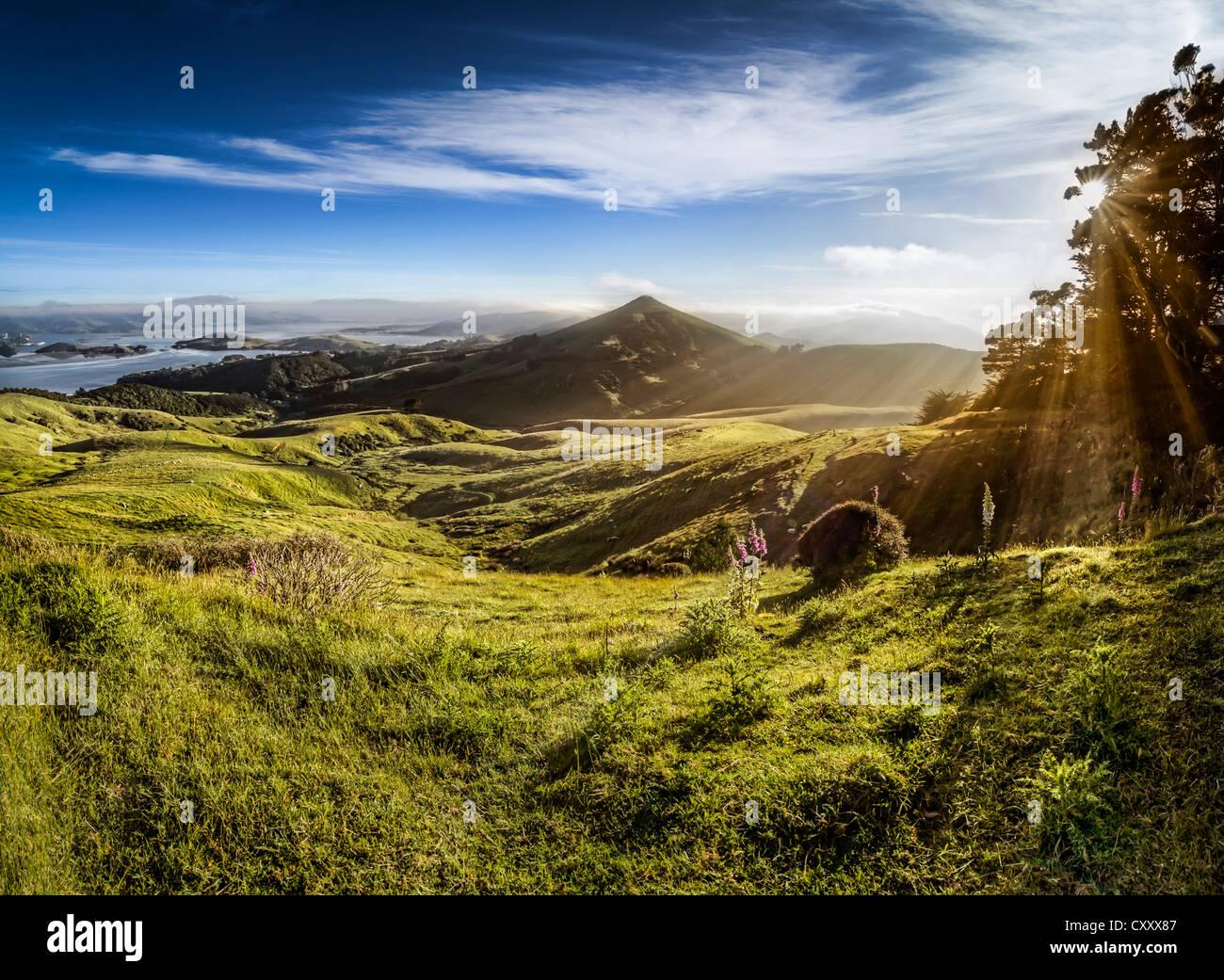 Schafbeweidung Wiesen im Seitenlicht, Sonnenstrahlen von der warmen Morgensonne Hooper Inlet Bay, Otago Peninsula, Stockbild
