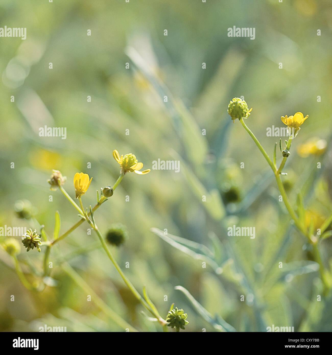 Grüne und gelbe Pflänzchen mit einem Bokeh-Hintergrund. Stockbild