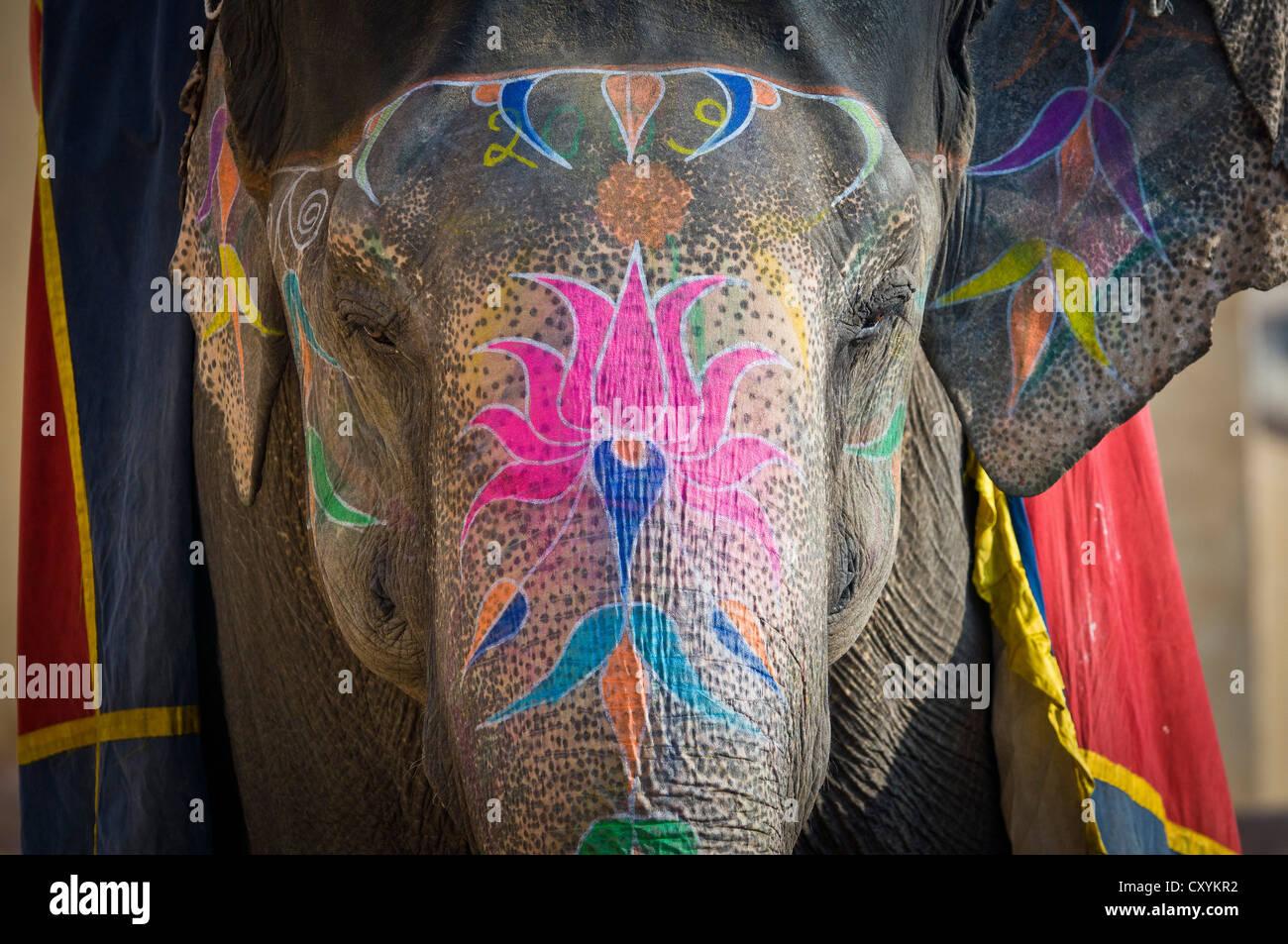 Bemalte Elefanten, Amer Fort, Amber Fort oder Palast Amber, Jaipur, Rajasthan, Indien, Asien Stockfoto