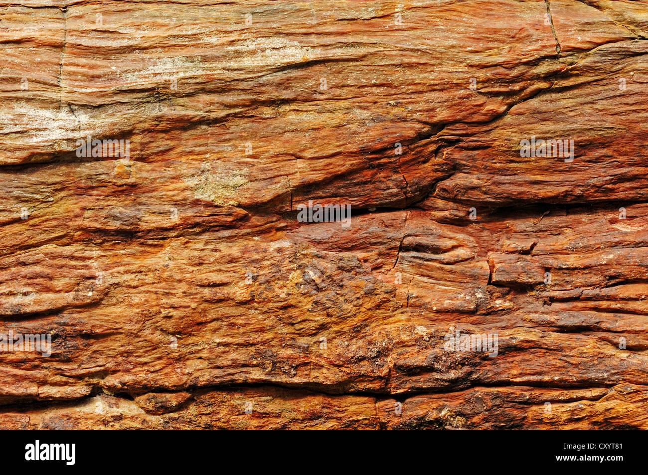 Versteinerter Baumstamm, Detailansicht, Arizona, USA Stockbild