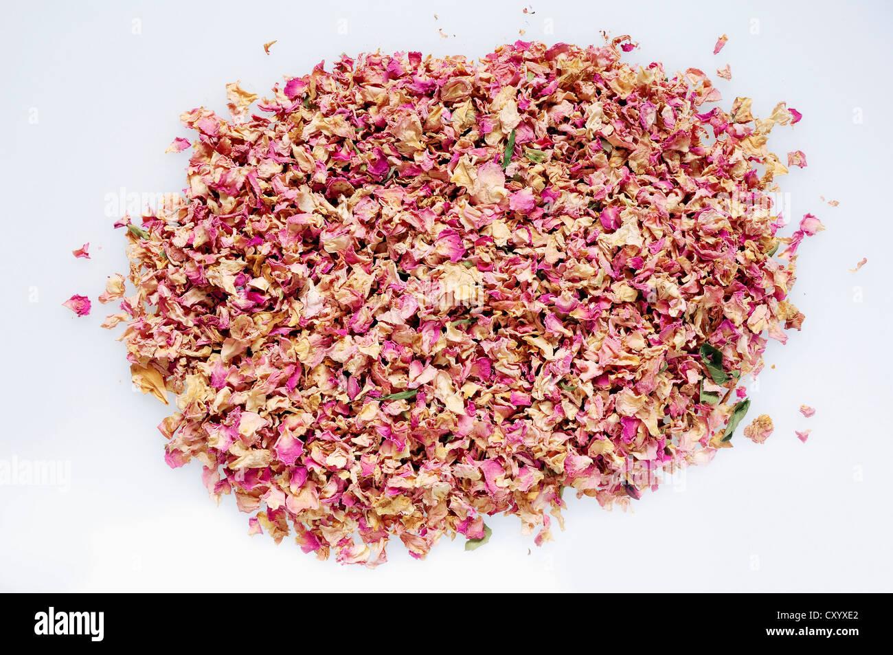 Getrocknete Rosenblätter (Rosa SP.), Weihrauch Stockbild