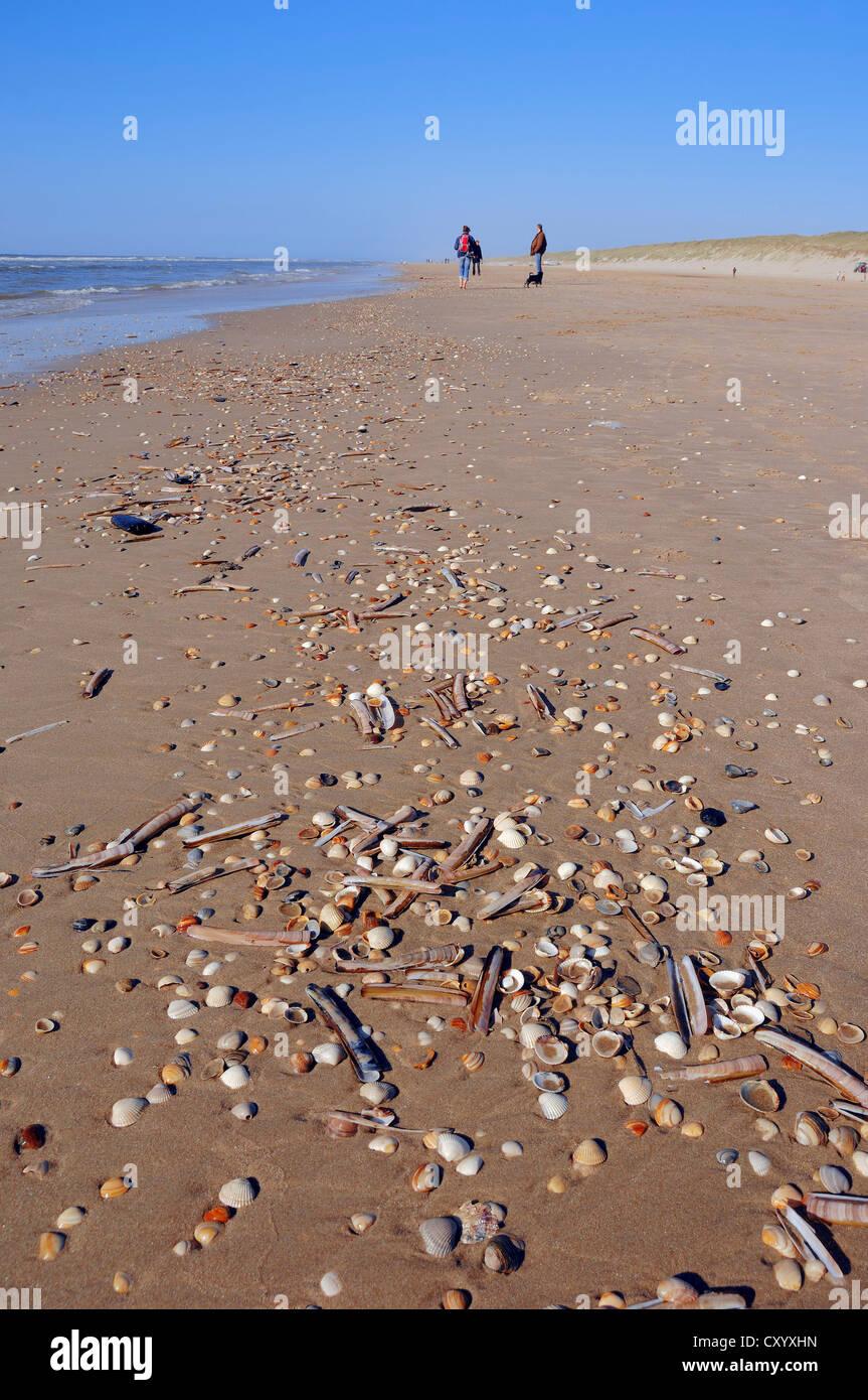 Strand Castricum aan Zee Castricum Fotos   Urlaubsfotos