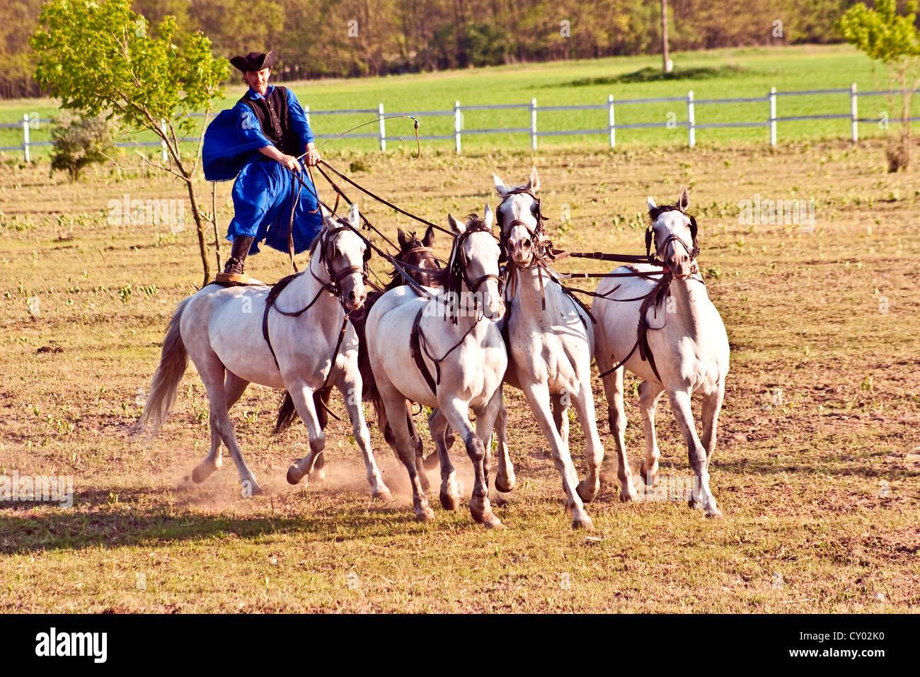 Ungarn, Kalocsa, Csikos Ungarisch Pferd Reiter Reiten sein Team stehend Stockbild