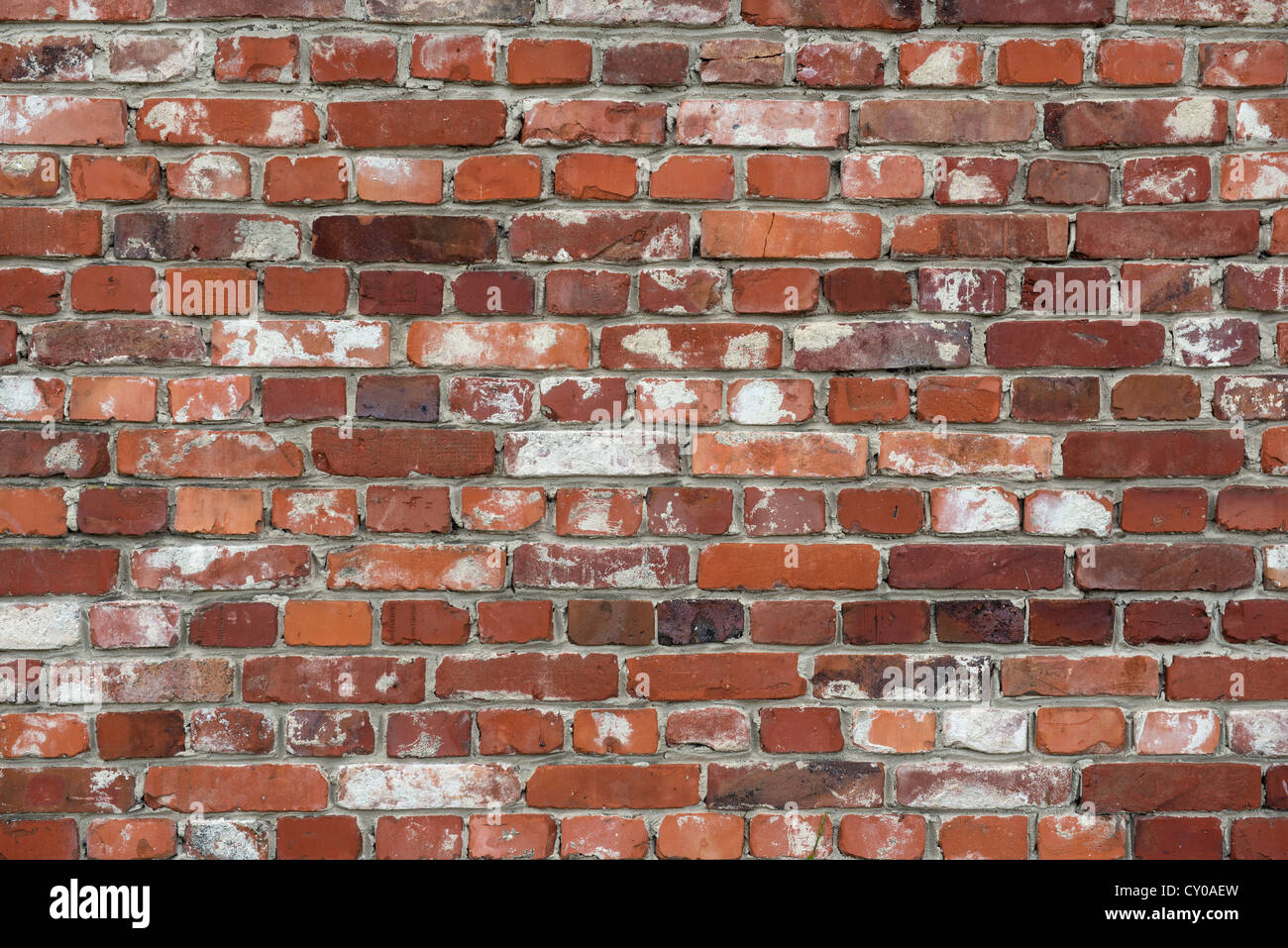 Alte Mauer Stockbild