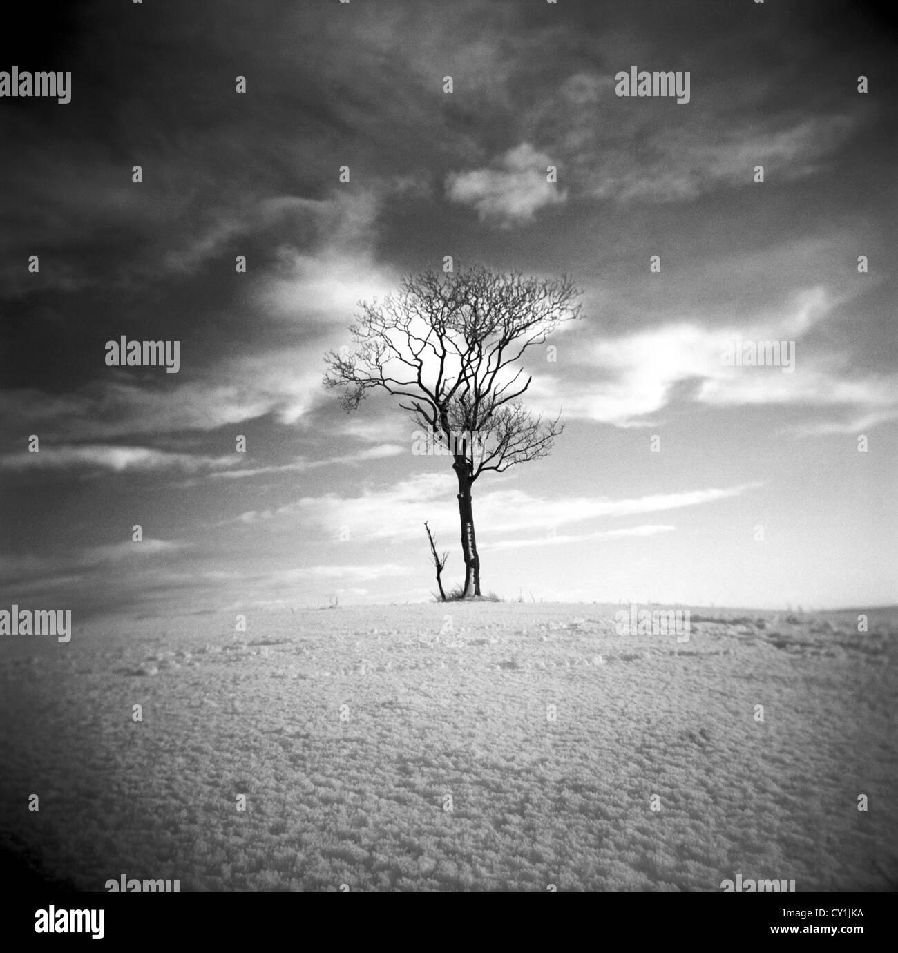 Einsamer Baum in einer kargen Landschaft unter warmen Himmel Stockbild
