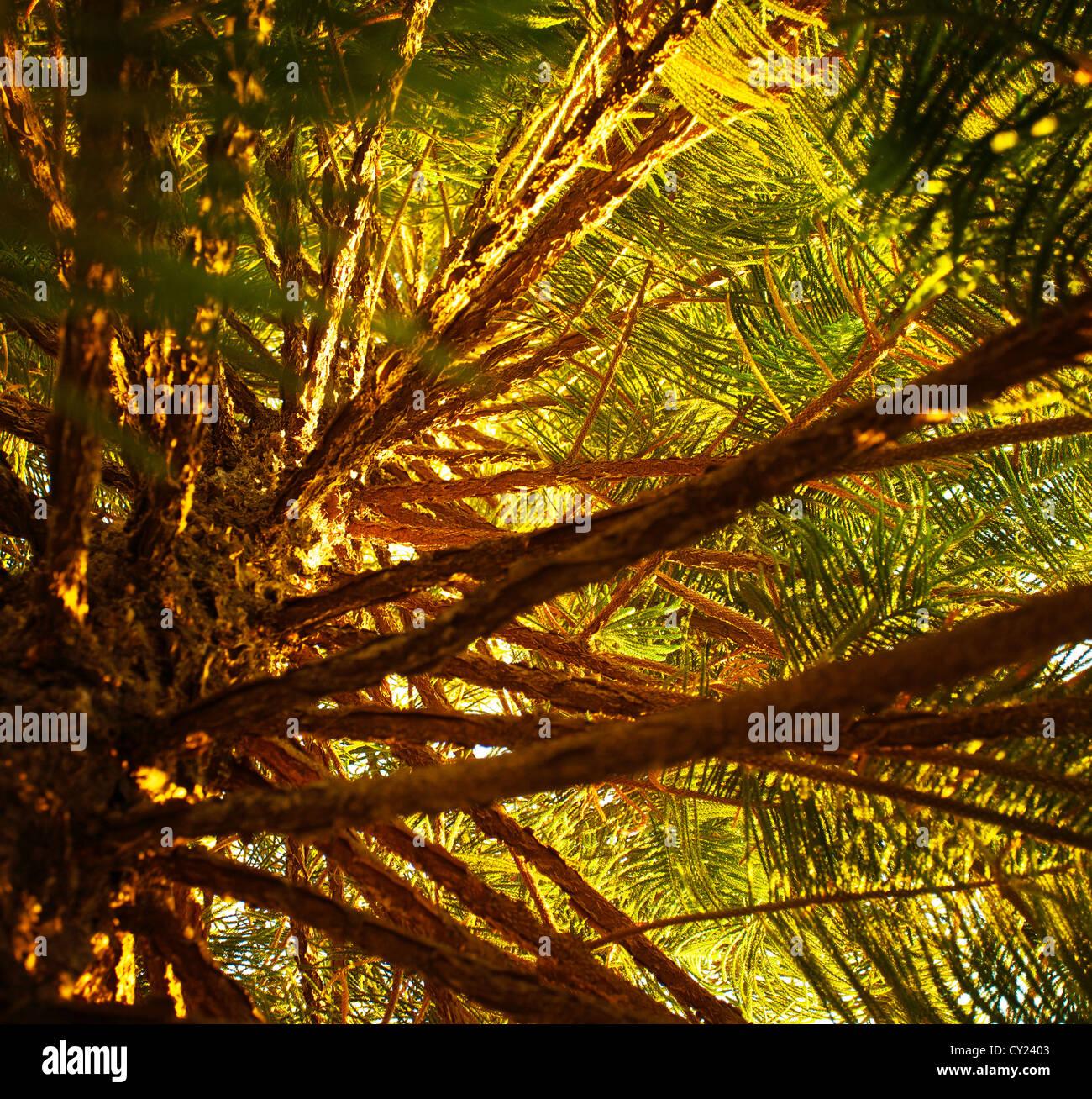 evergreen forest stockfotos evergreen forest bilder alamy. Black Bedroom Furniture Sets. Home Design Ideas