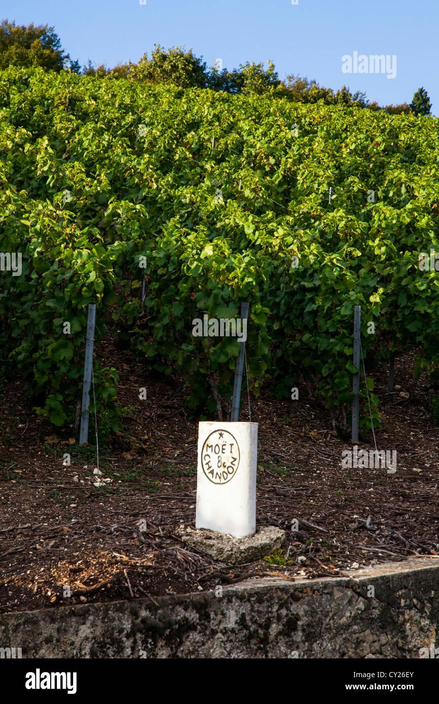 Moet und Chandon Champagner Produzent Stein- und Reben in der Nähe von Epernay, Champagne, Frankreich Stockbild