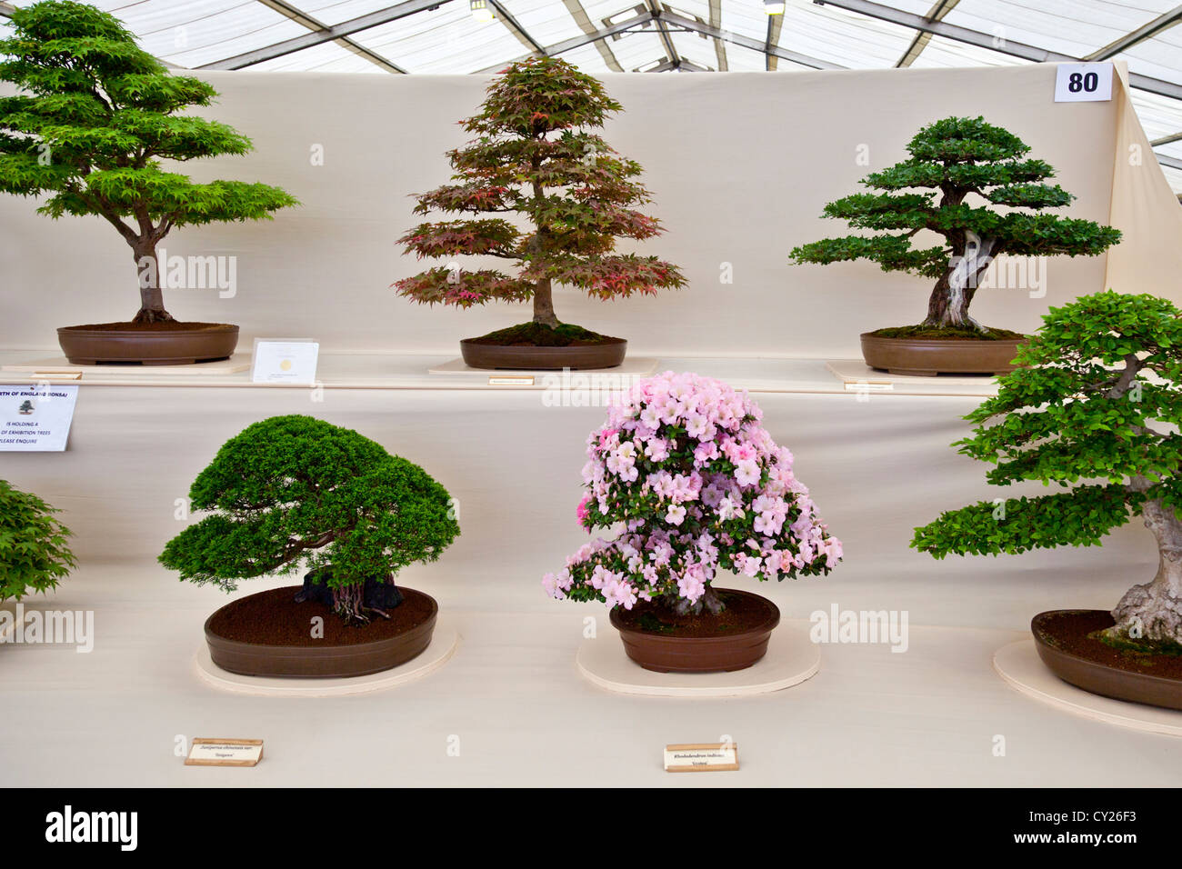 bonsai display stockfotos bonsai display bilder alamy. Black Bedroom Furniture Sets. Home Design Ideas
