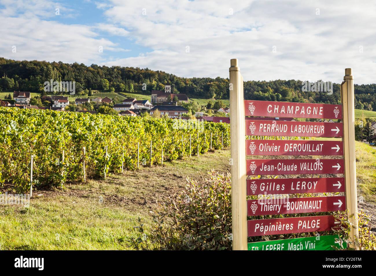 Sektkellerei Zeichen und Reben in der Nähe von Epernay, Champagne, Frankreich Stockbild