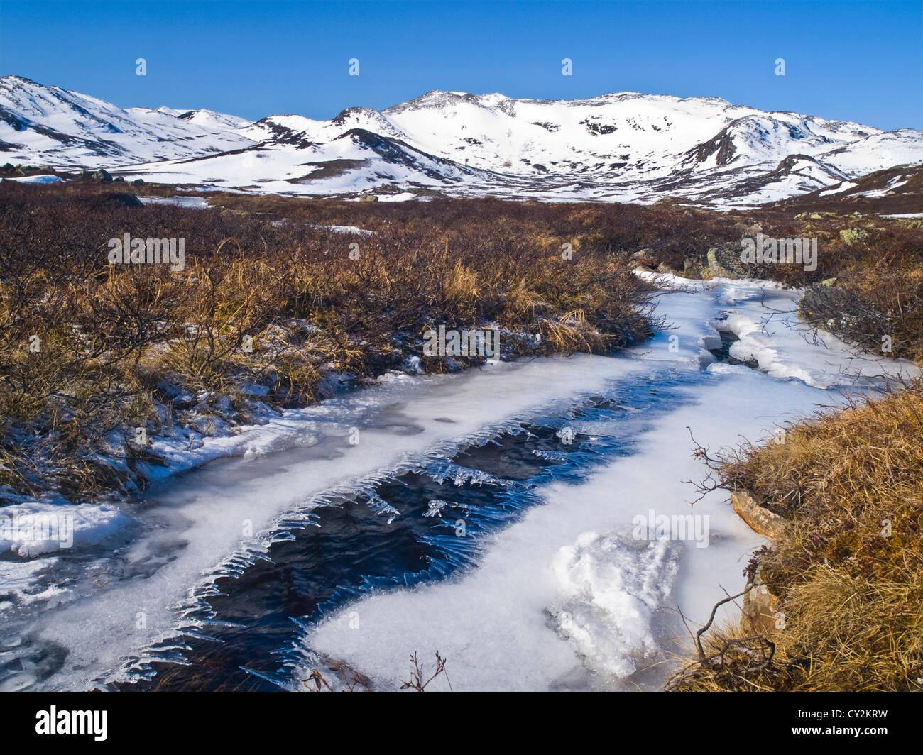 Frühling kommt früh auf die Hardanger, Norwegen Stockbild